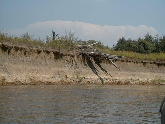 A kép érdekessége az, hogy a fát ami a parton van a víz tette fel ide, tehát olyan magas is szokott lenni magas vízállásnál.