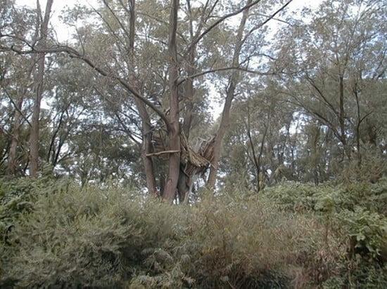 A 1,5 km-re Kömendtől lévő lerobbant építményt a fán én csak Tarzan háznak hívom..