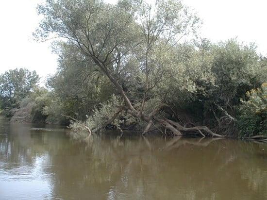 A jobb oldalon látható jellegzetes fával szemben, a másik parton autólejárat, a parton táborozásra alkalmas terület.