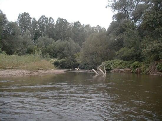 A második része a Hollósi kanyarnak, az S betű közepe. A képen látható, hogy a folyó közepén elakadt fa van a vízben. Nagyon gyakori az, hogy a jobb part, és az elakadt fa között a folyó rőzsegátat épít. Ha erre nem számít valaki, és a jobb part mellett marad a külső íven, akkor nem biztos, hogy vissza tud menni balra, mivel itt elég gyorsan folyik a Rába, és a kenut begyűrheti maga alá. Ha többen vagytok, akkor mindenképpen érdemes a képen látható bal oldali kavicspadra kievezni, mert így belátod, hogy el van-e zárva a továbbhaladás útja, a másik ok pedig az, hogy annyira gyakori itt a borulás az első részén a kanyarnak, hogy tudtok azoknak segíteni, akik nem tudtak lejönni borulás nélkül.