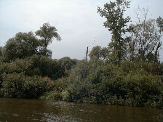 Ismét egy jellegzetes elszáradt fa a jobb parton. Én totemnek hívom.