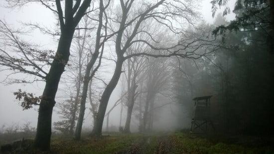 Szombat reggeli futásomon készítettem ezt a szép ködös képet a zalai erdőben. Ilyen időt vártunk a vasárnapi evezésre is.