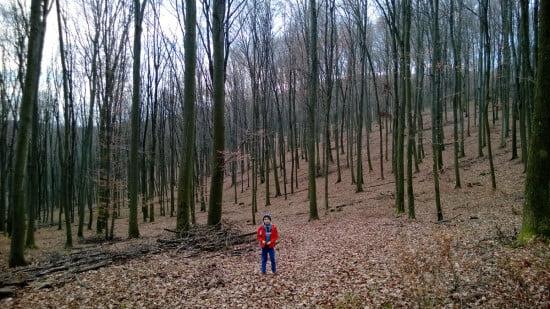 Kicsi Somi a nagy erdőben.