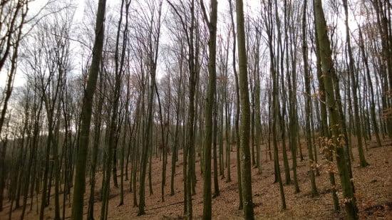 Zalai erdőrészlet.