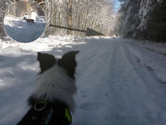 Sok szeretettel a vadászoknak: A képen egy fegyelmezett, ülő kutya látható, aki nyugodtan nézi, ahogy átmasíroznak előtte az őzek az erdei úton.