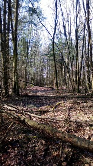 Egy már nem használt út. Ilyen helyeken néha gátfutónak érzem magam, annyi a fa keresztben.