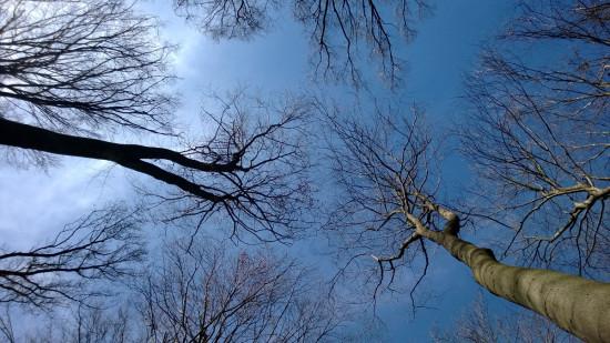 Rigyácon a fák az égig érnek.