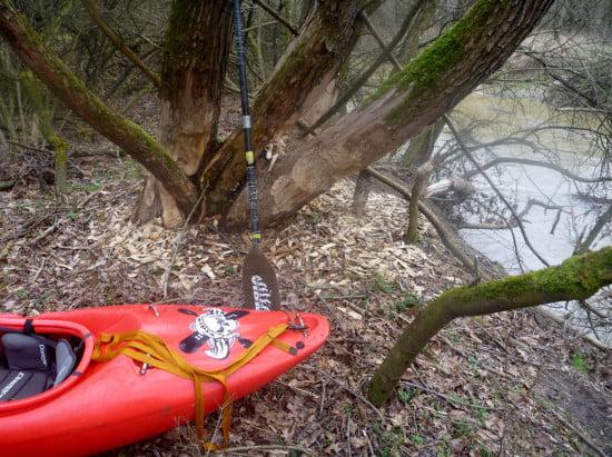 Lenti felett nem igazán tapasztaltuk a hódok nyomait. Lenti alatt szinte nincs 15 méteres szakasz a folyón, ahol ne lenne hódrágás.