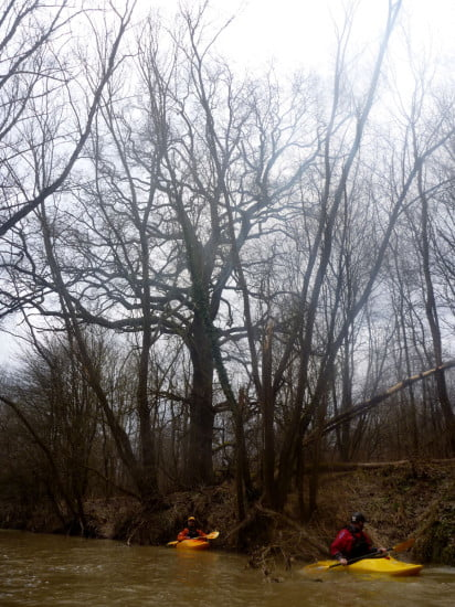A kajakos barátaimhoz lehet viszonyítani a háttérben lévő öreg tölgy méretét. Nem magányos fa, sok ilyen öreg tölgy van a Kerka partján.