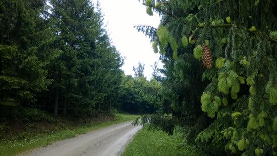 trail_running_esztergnye_oltarc_erdeszetiut_03