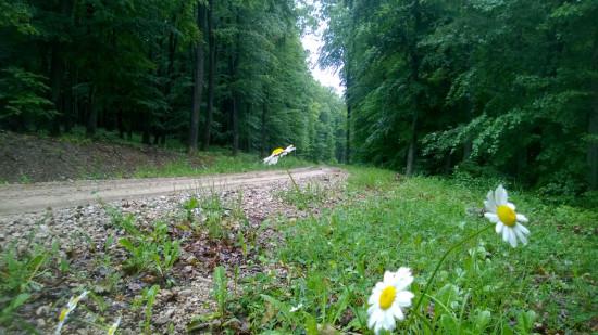 trail_running_esztergnye_oltarc_erdeszetiut_04