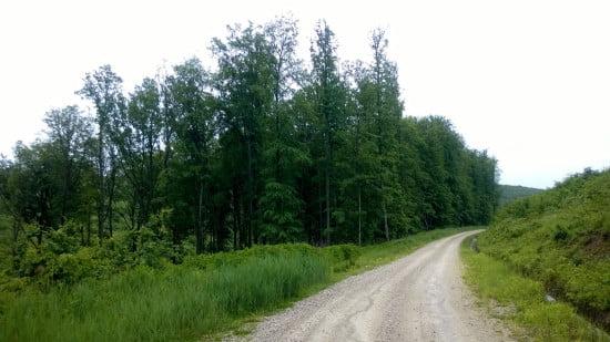 trail_running_esztergnye_oltarc_erdeszetiut_07