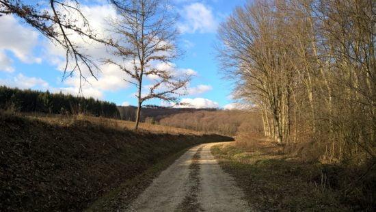 Ilyen szép út vezet a vadászháztól.