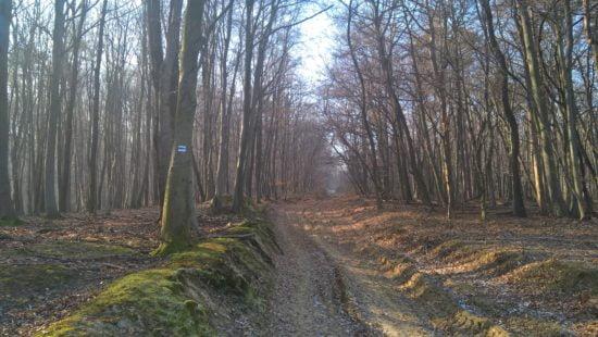 Néhol erdei földút, néhol szűk ösvény.